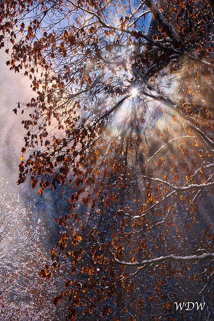 Yosemite-1-14-17-548-Aurora2017-HDR.jpg